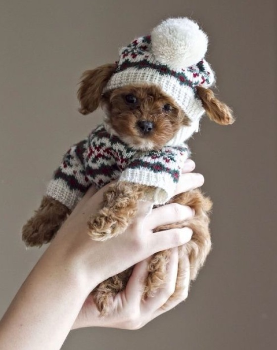 doggie sweater