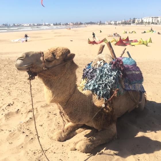 marrakech-travel-guide-essaouira-beach